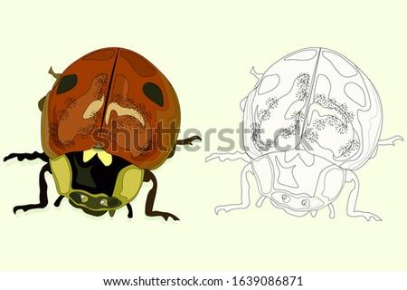 vector illustration  ladybug