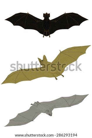 vector illustration of a bat