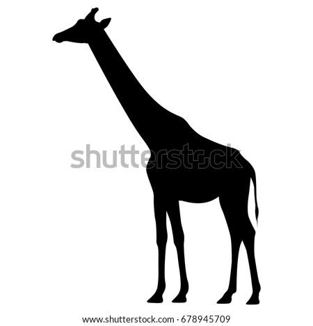 Vector illustration of a black silhouette giraffe. Isolated white background. Icon giraffe side view profile.
