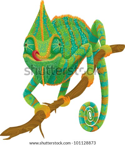 Vector illustration of a chameleon climbing on a branch isolated on  white background. - stock vector