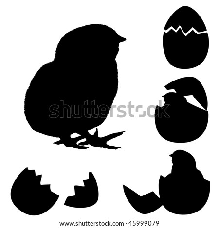 vector illustration of a chicken silhouette. Newborn chick with egg's  shell.