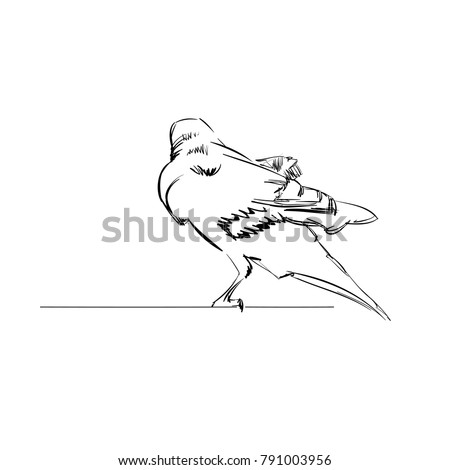 vector illustration of a crow