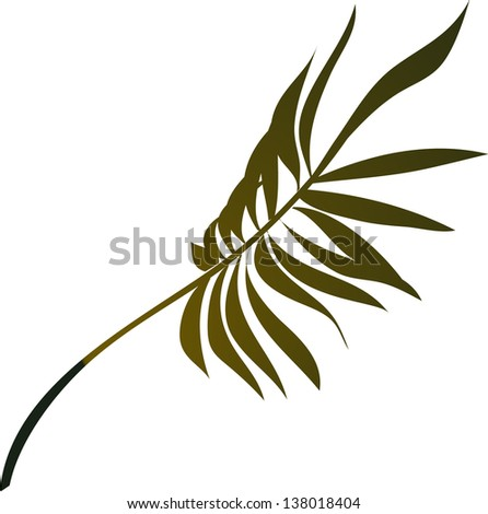 Vector illustration of a fan palm