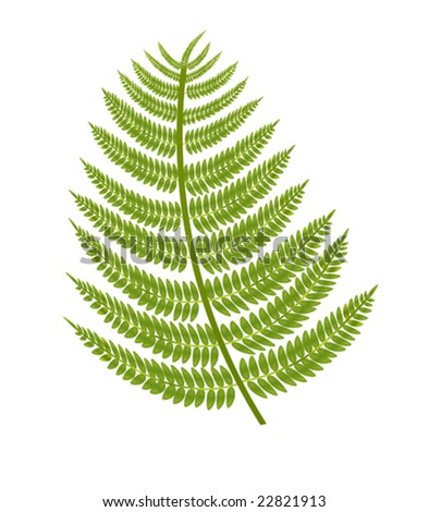 vector illustration of a fern branch