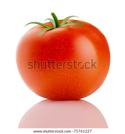 Vector illustration of a fresh ripe red truss tomato isolated on white