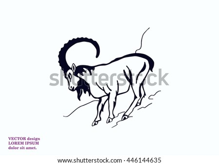 vector illustration of a goat