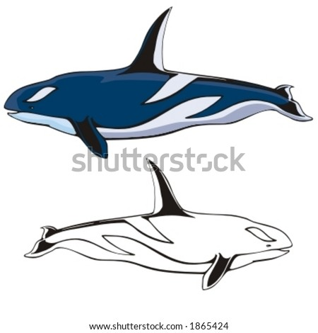 stock vector : Vector illustration of a killer whale.
