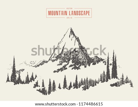 Vector illustration of a mountain peak with fir forest, engraving style, hand drawn, sketch