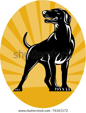vector illustration of a Pointer dog with sunburst in background done in retro style set inside an oval.