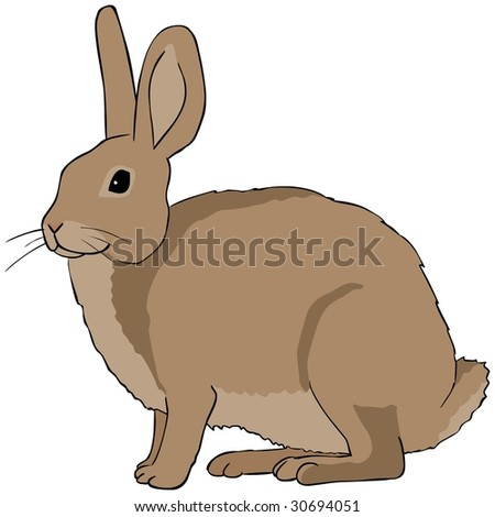 Hare illustration - photo#19