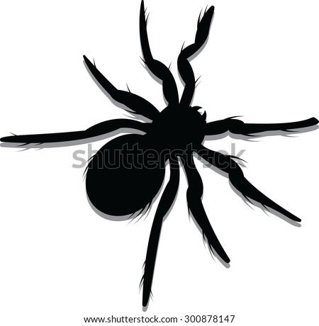 vector illustration of a spider