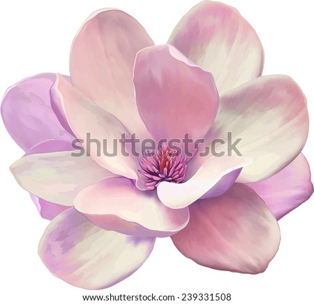 Vector Illustration of a tender pink magnolia flower isolated on white background