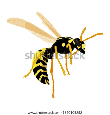 vector illustration of a wasp