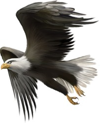 Vector illustration of american bald eagle in flight isolated on white background