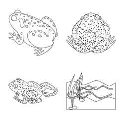 Vector illustration of amphibian and animal icon. Collection of amphibian and nature vector icon for stock.