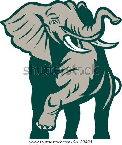 vector illustration of an african elephant charging attacking isolated on white.