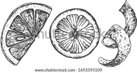 Vector illustration of an orange slices and zest spiral. Vintage hand drawn engraving style.