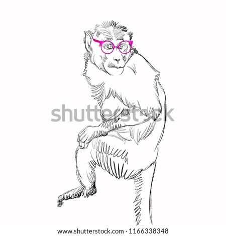 Vector Illustration of Ape with Vintage Glasses. Sketched Little Monkey with Sunglasses. Monochrome Freehand Drawing. Stylized Cartoon Beautiful Marmoset. Realistic Pen Drawing Imitation. Animal Art