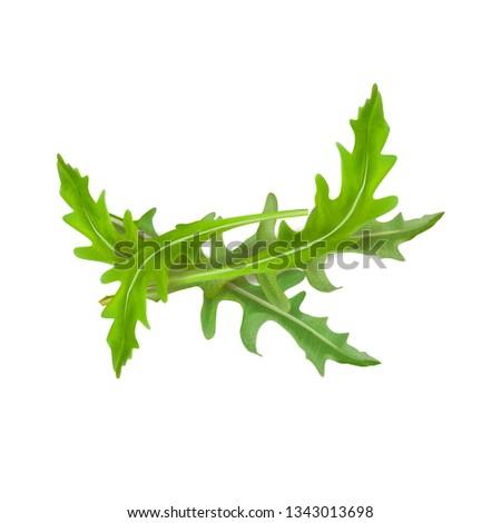Vector illustration of arugula Foto stock ©