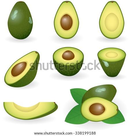 Vector illustration of avocado