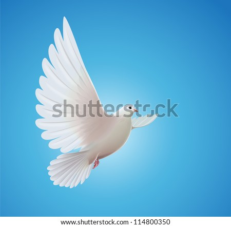 Vector illustration of beautiful shiny white dove flying way up in a blue sky