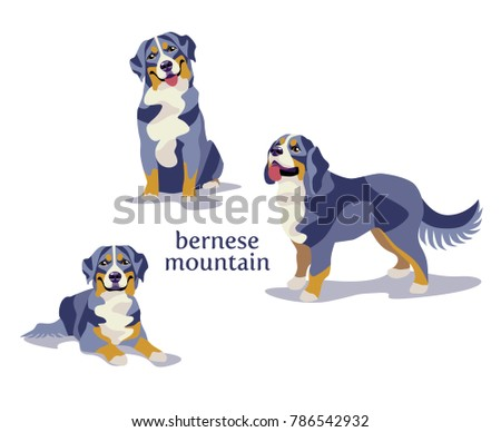 Vector illustration of Bernese Mountain Dog in different poses isolated on white background.