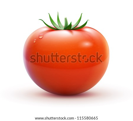 Vector illustration of big ripe red fresh tomato  isolated on white background
