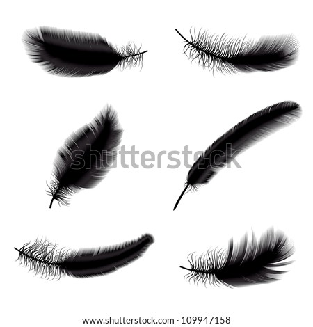 Vector illustration of black feathers