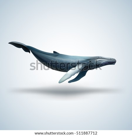 Vector illustration of Blue whale isolated on white background