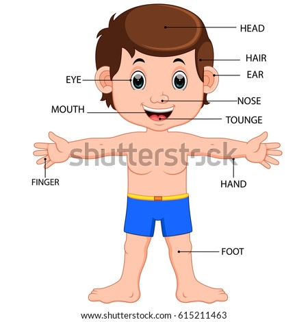 vector illustration of boy body parts diagram poster