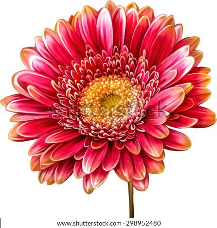 vector illustration of bright