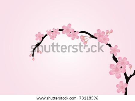 cherry tree branch. cherry tree branch silhouette.