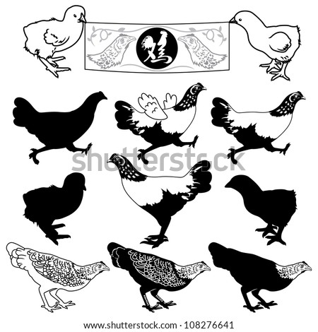 Vector illustration of chicken design set.