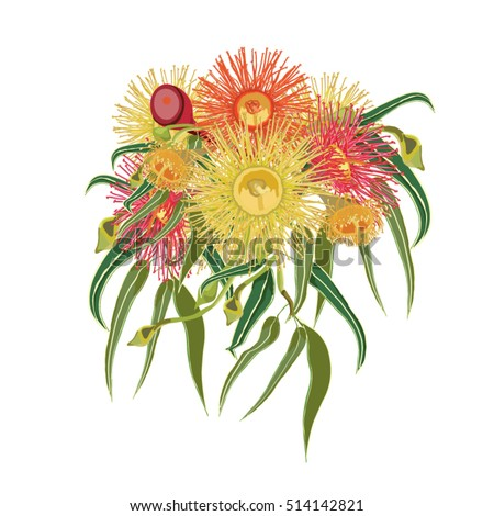 Vector Illustration of Colorful Australian Native Flowers