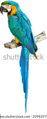 Stock Photo Vector illustration of Colorful blue parrot macaw isolated on white background