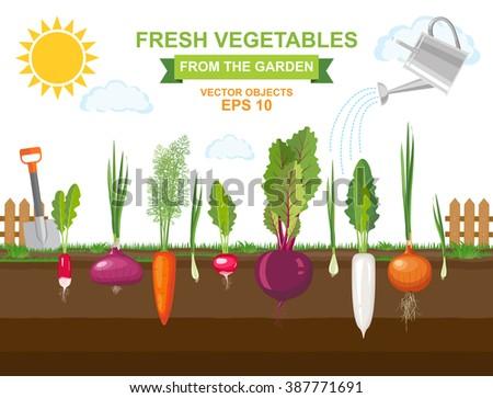 Grow The Garden Plant Vectors Download Free Vector Art Stock