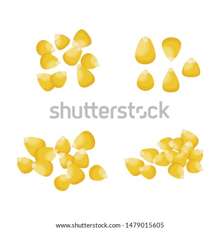 vector illustration of corn