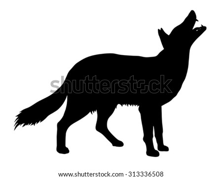 vector illustration of coyote