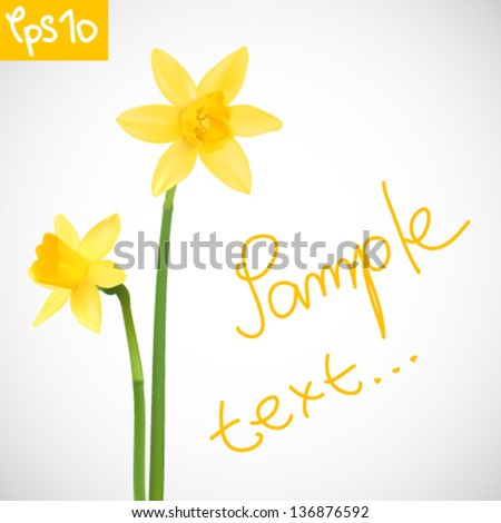 vector illustration of daffodils