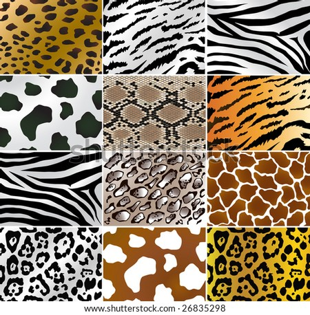 Vector Illustration of different animals and snakes skins