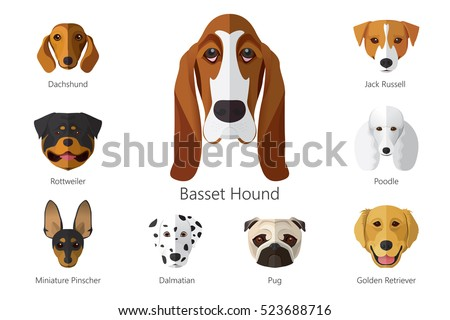 Shutterstock Vector illustration of dog breeds isolated on white background.
