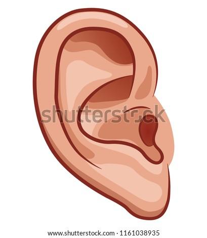 Vector illustration of ear on white background Photo stock ©