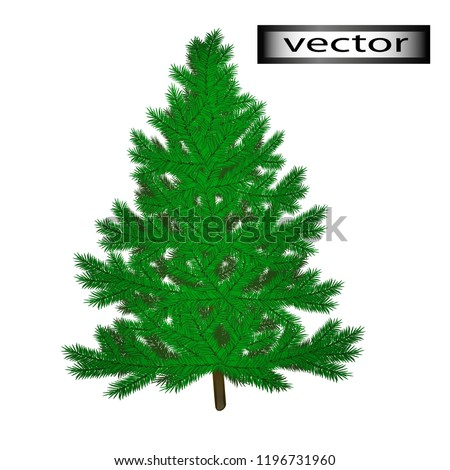Vector illustration of fir tree to decorate for the new year green needle wood from the forest a symbol of Christmas