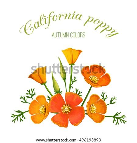 vector illustration of flower