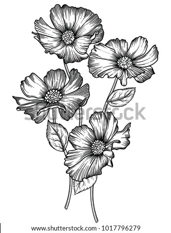 Vector illustration of flowers and leaves.Very detailed flowers in sketch style.Elegant floral decoration  for design.Elements of composition are separated in each group. Isolated on white background #1017796279