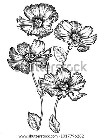 Vector illustration of flowers and leaves.Very detailed flowers in sketch style.Elegant floral decoration  for design.Hand drawn and separated in each group. Isolated on white background #1017796282