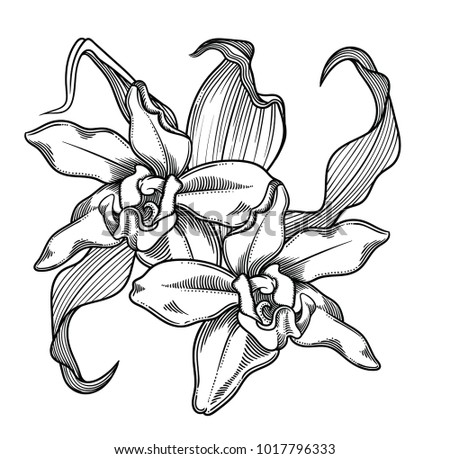 Ink drawing flower brushes free photoshop brushes at brusheezy vector illustration of flowerstailed flowers in black and white sketch style elegant floral mightylinksfo