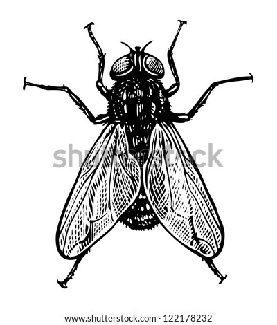 vector illustration of fly in...