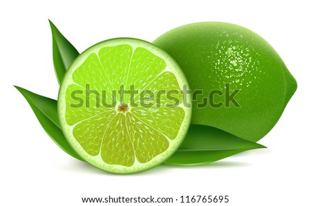 vector illustration of fresh