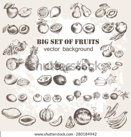 Vector illustration of fruits collection in vintage style